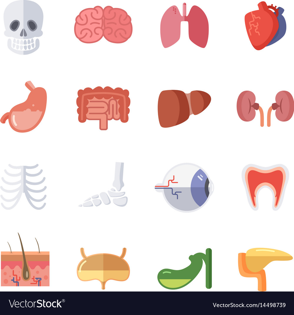 Male And Female Anatomy Set Royalty Free Vector Image