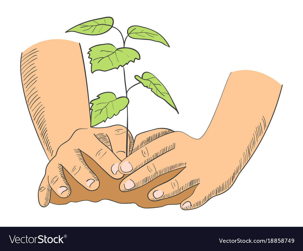 Hands planting young tree