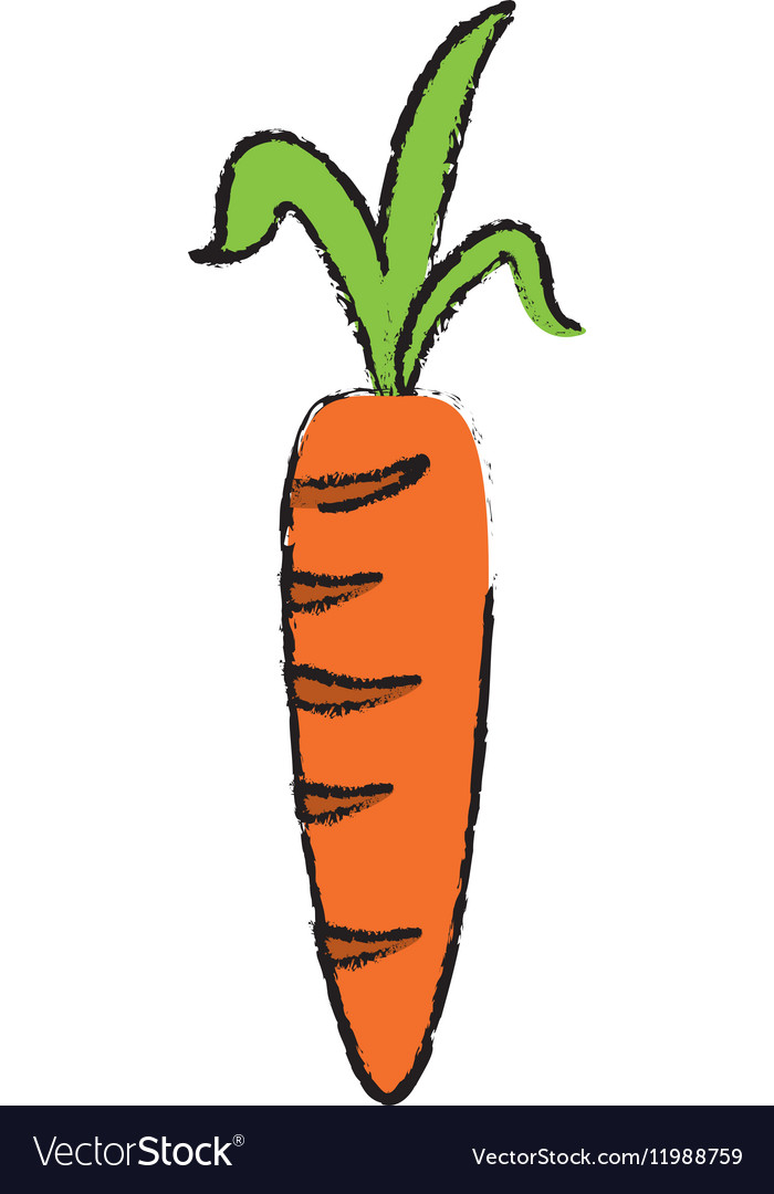 Drawing Fresh Carrot Vegetable Healthy Icon Vector Image