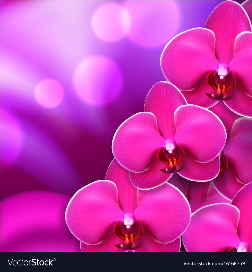 Pink Flower Orchid Background Royalty Free Vector Image