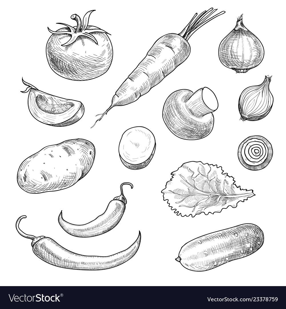 Sketch vegetables tomato champignon hand drawn