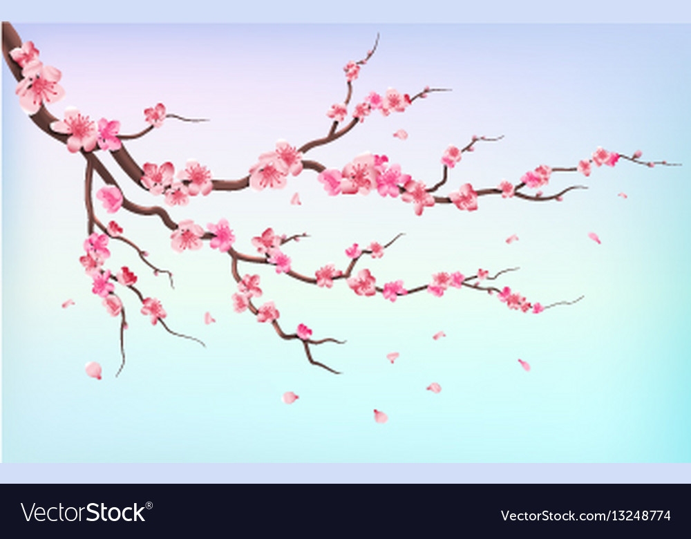 Japan sakura branches with cherry blossom flowers
