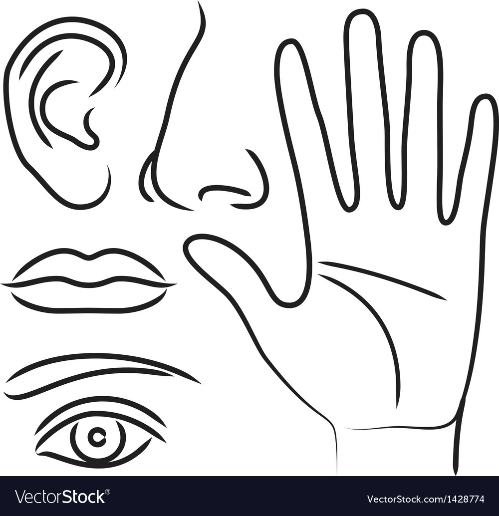Sensory organs hand nose ear mouth and eye vector image