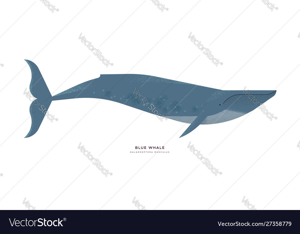 Blue whale animal cartoon on isolated background