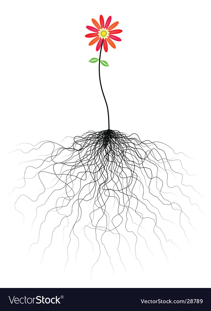 Flower and roots vector image