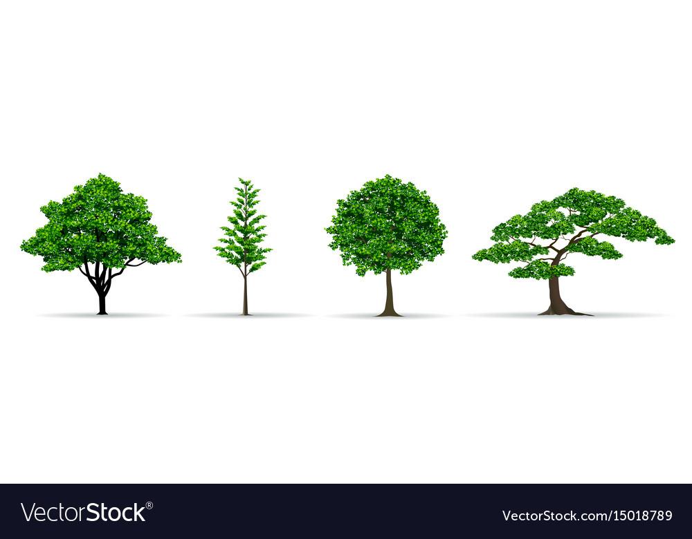 Tree set realistic vector image