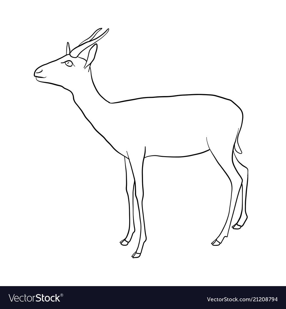 Drawing antelope