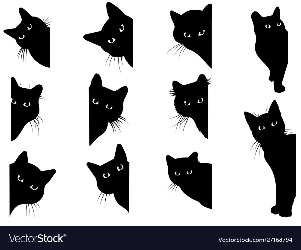 Set black cats looking out corner