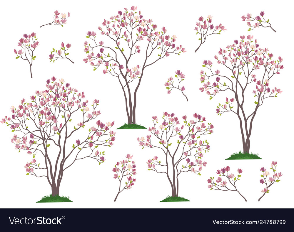Magnolia Trees And Branches Royalty Free Vector Image