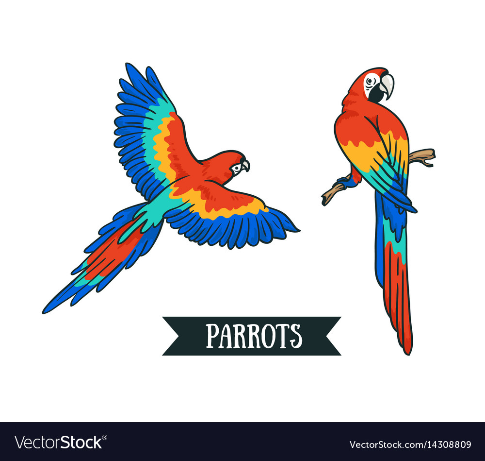 Ara parrot isolated tropical design element birds vector image
