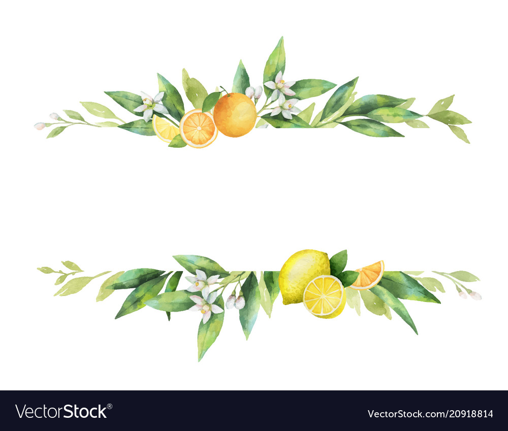 Watercolor banner citrus fruits and