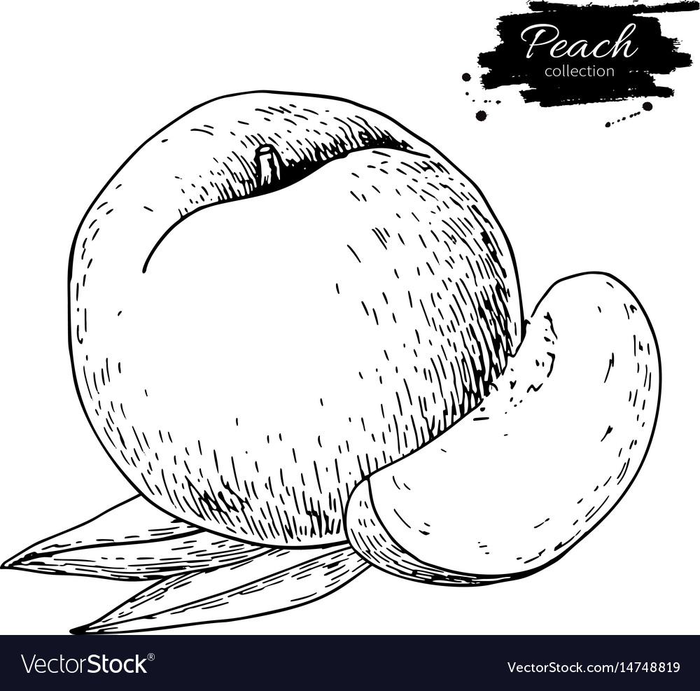 Peach drawing isolated hand drawn peach