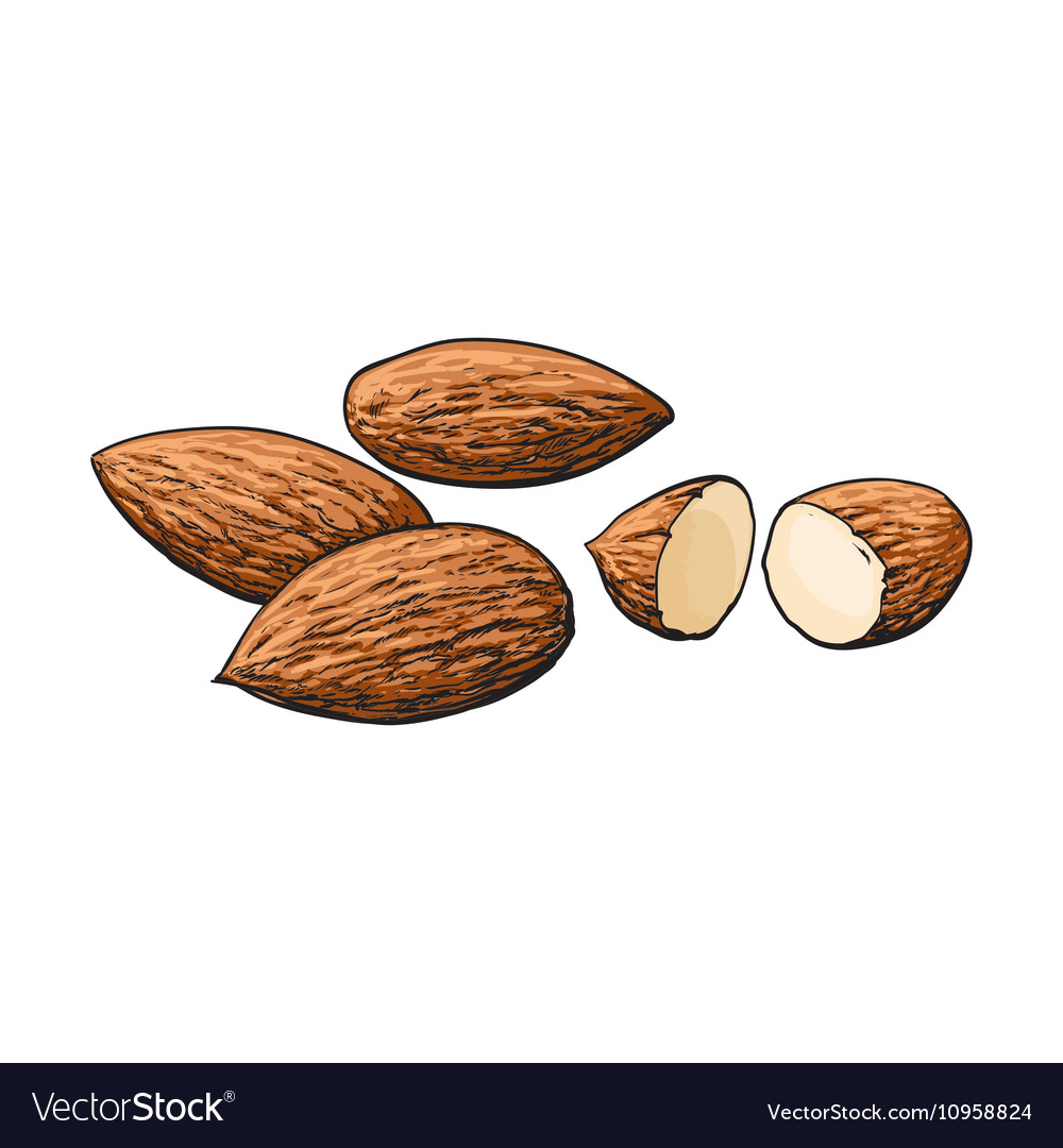 Whole and cut almond nuts isolated on white