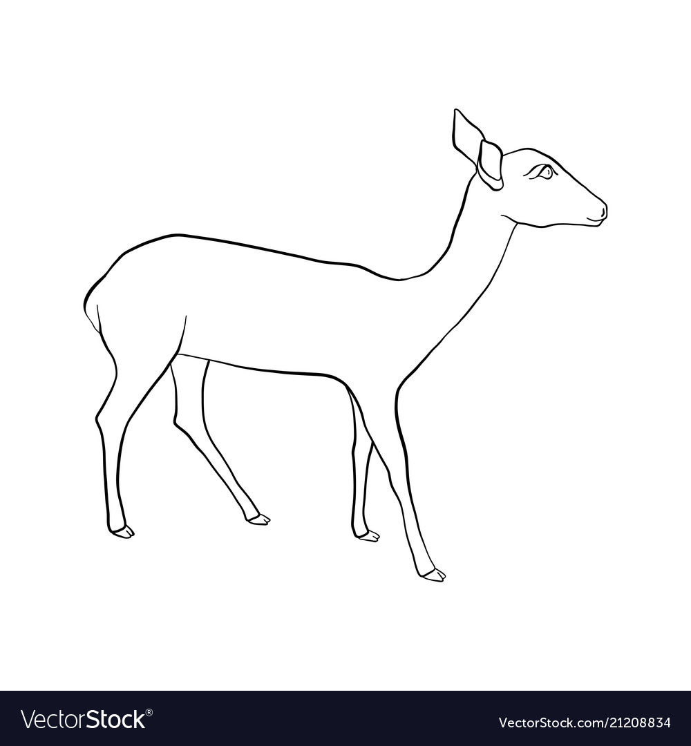 Drawing doe