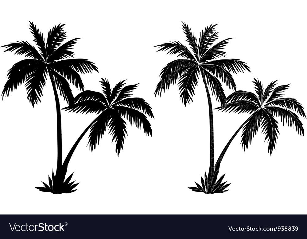 palm trees black silhouettes royalty free vector image