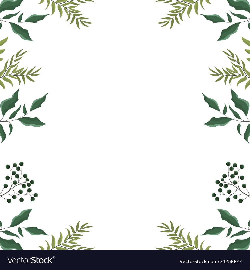 Leaves frame white background