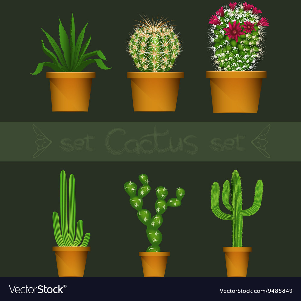 Different cactus types in flower pot realistic