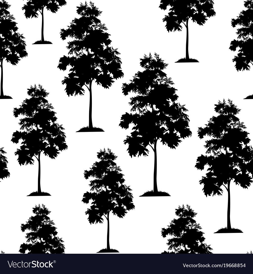 Acacia trees seamless