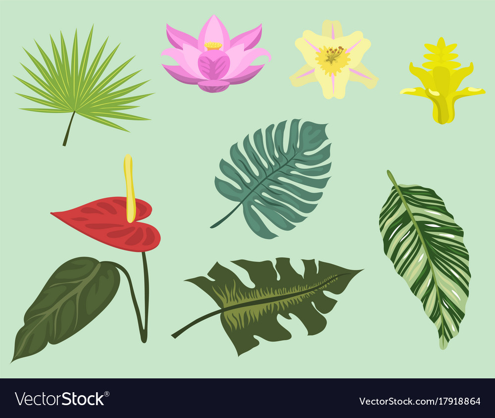 Tropical leaves summer green exotic jungle palm vector image