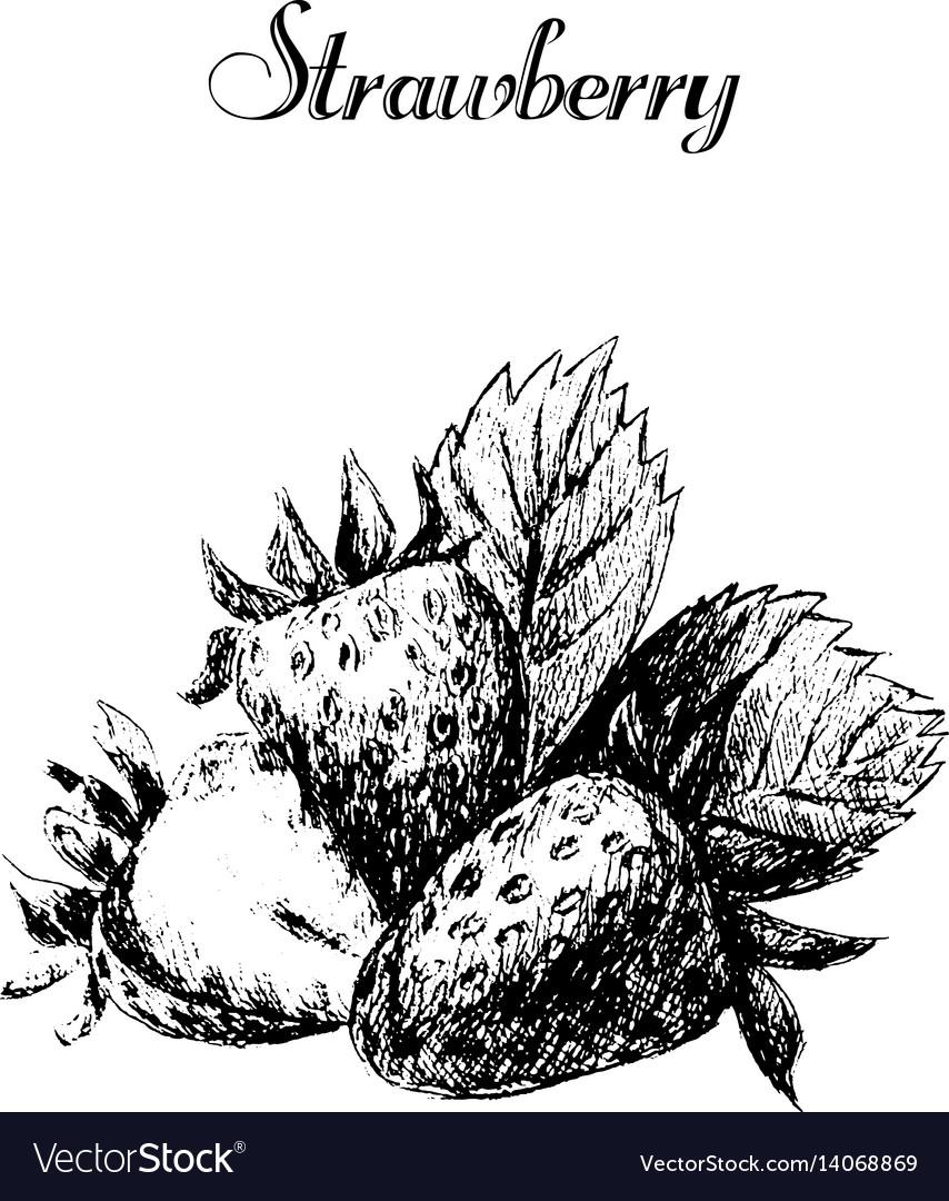 Ink hand drawn vintage strawberry vintage fruit