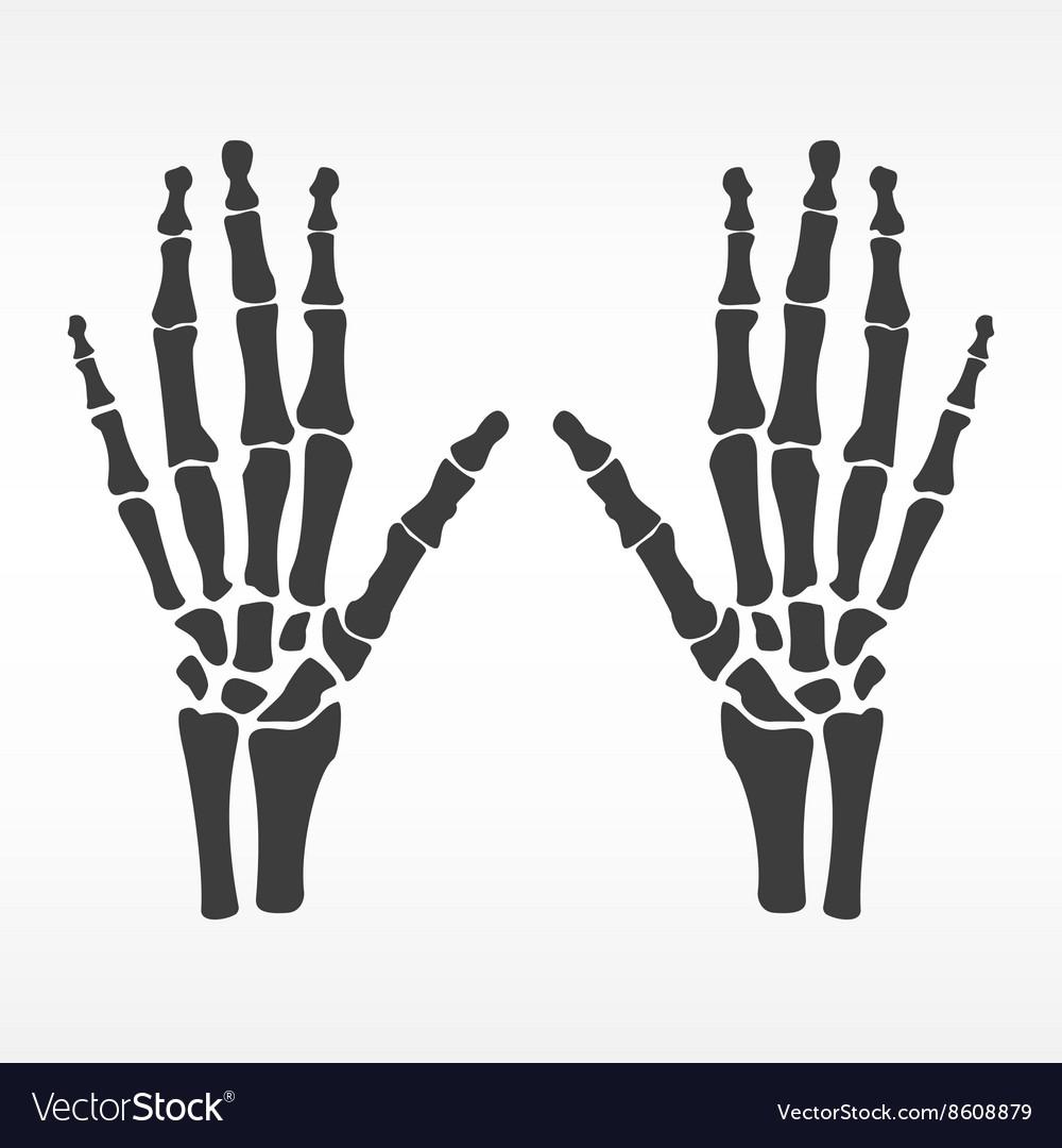 Human hands bones Royalty Free Vector Image - VectorStock