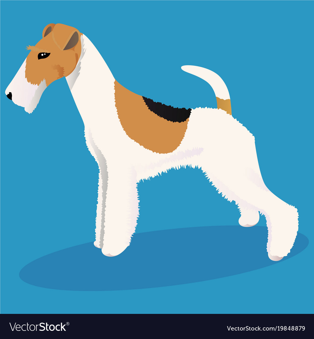 Wire fox terrier dog Royalty Free Vector Image