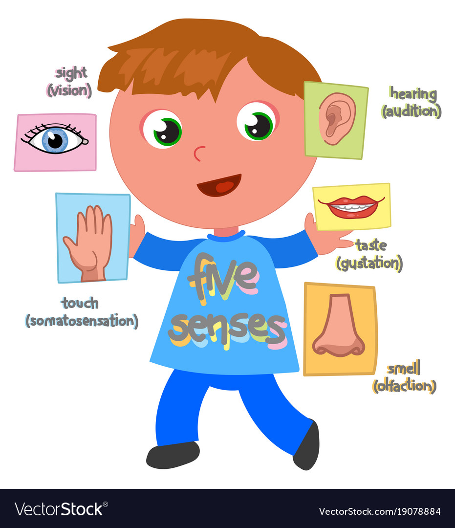 Image result for senses