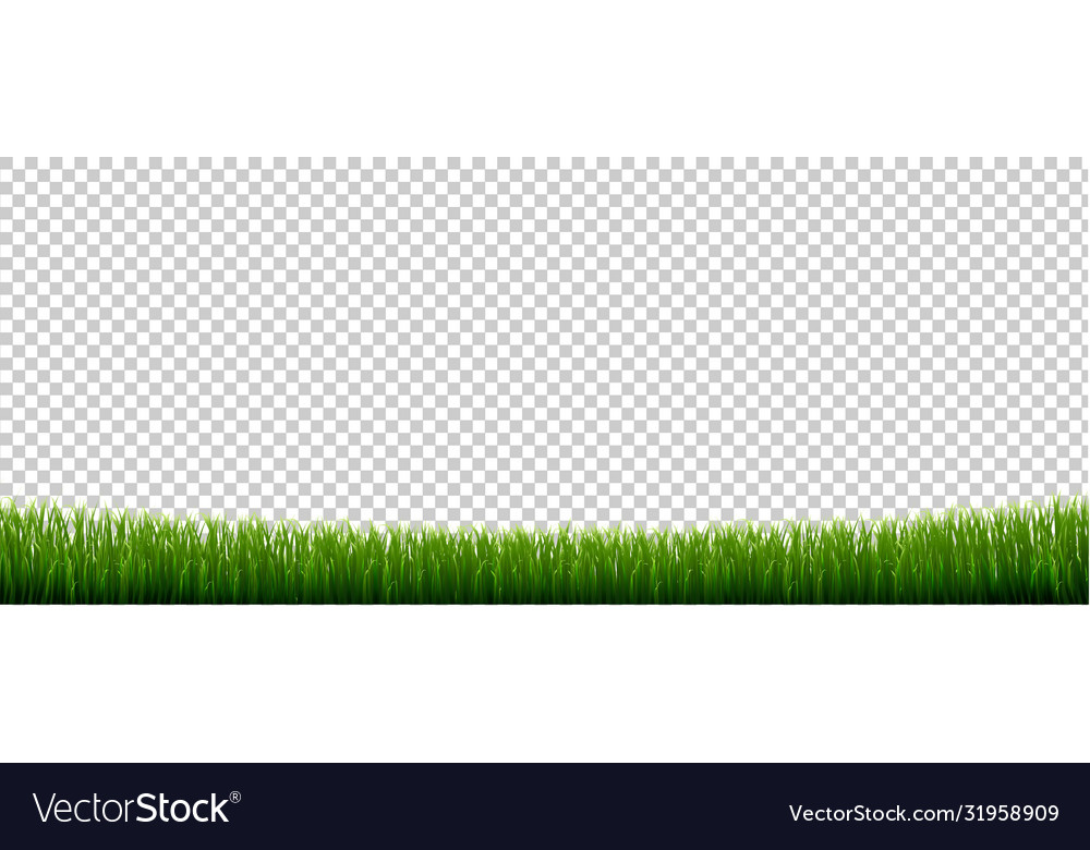 Green grass border with isolated transparent