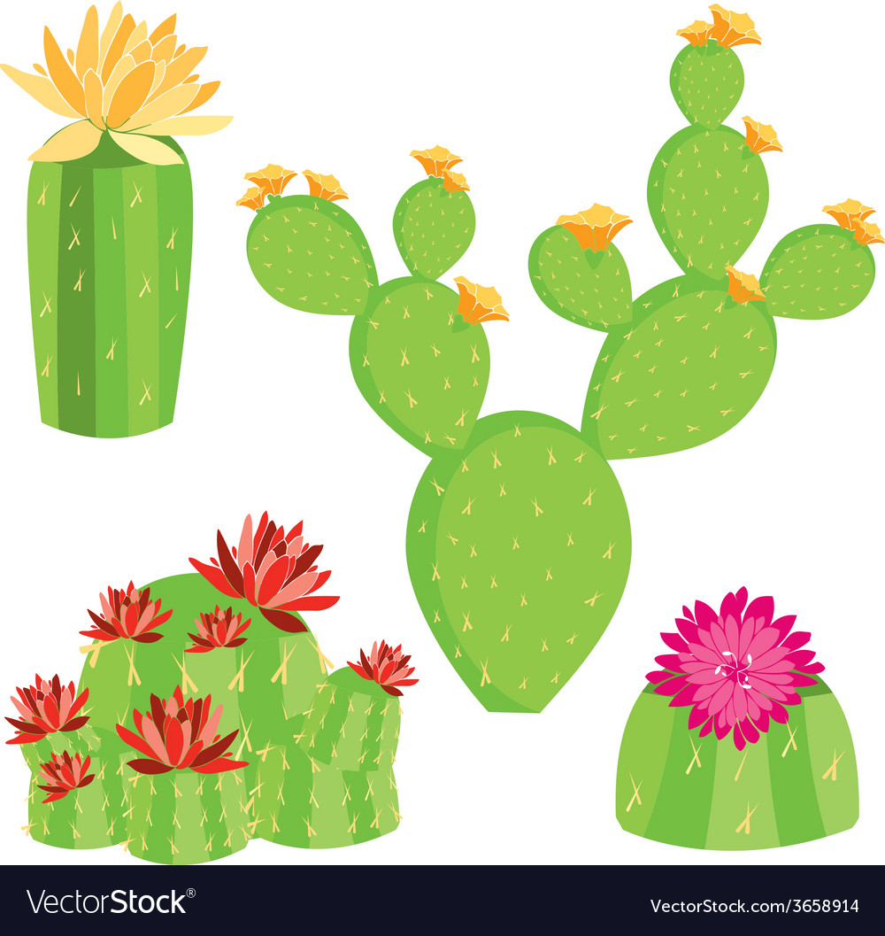 of different cactus with flowers royalty free vector image