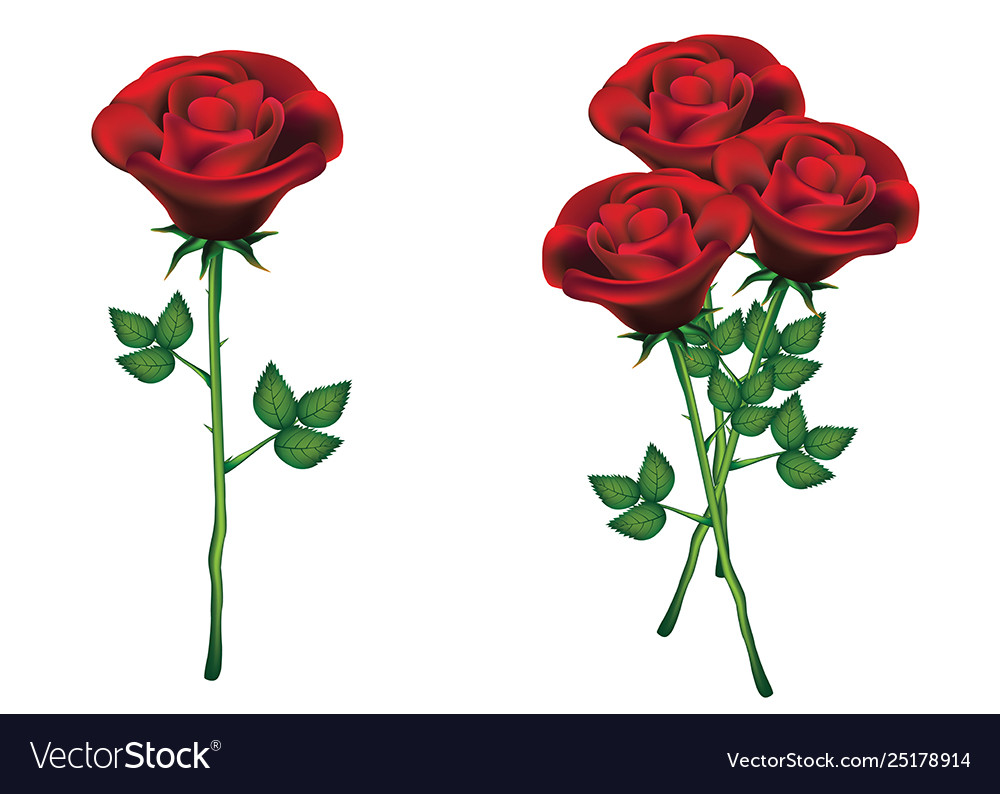 Red roses with green leaves on white background