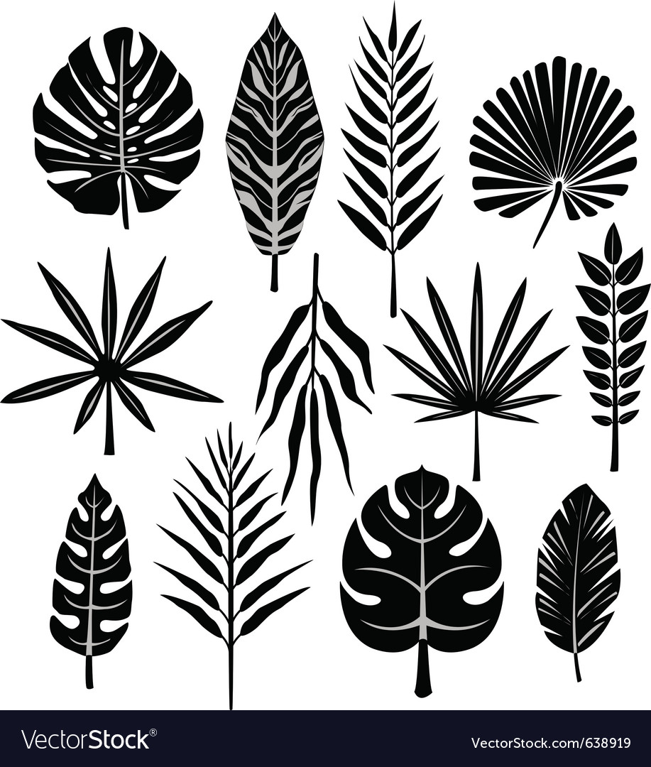 Tropical Leaf Royalty Free Vector Image Vectorstock Jungle background filled with plants and leaves! vectorstock