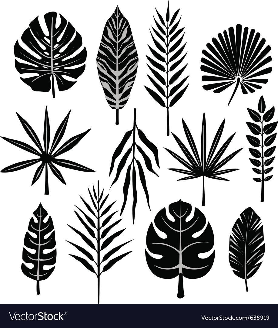Tropical leaf vector image