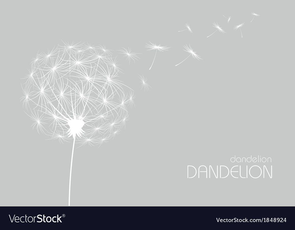 Abstract flower dandelion