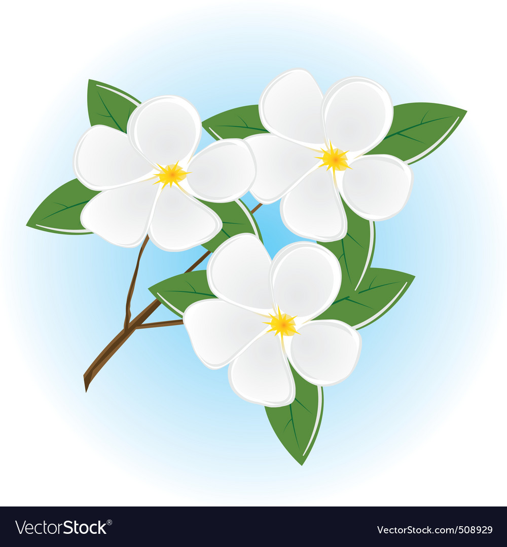 Branch Of A Tree With White Flowers Royalty Free Vector