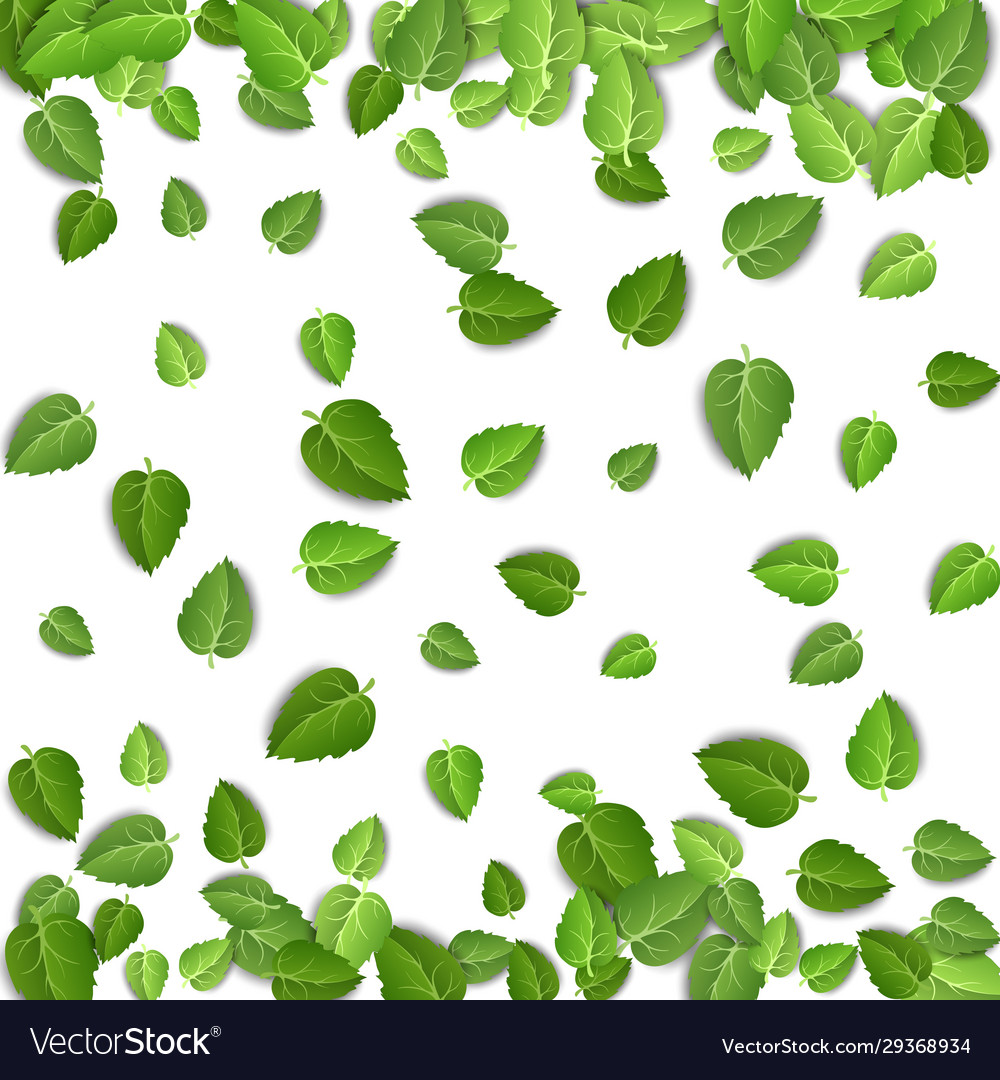 Flying green leaves on white background spring