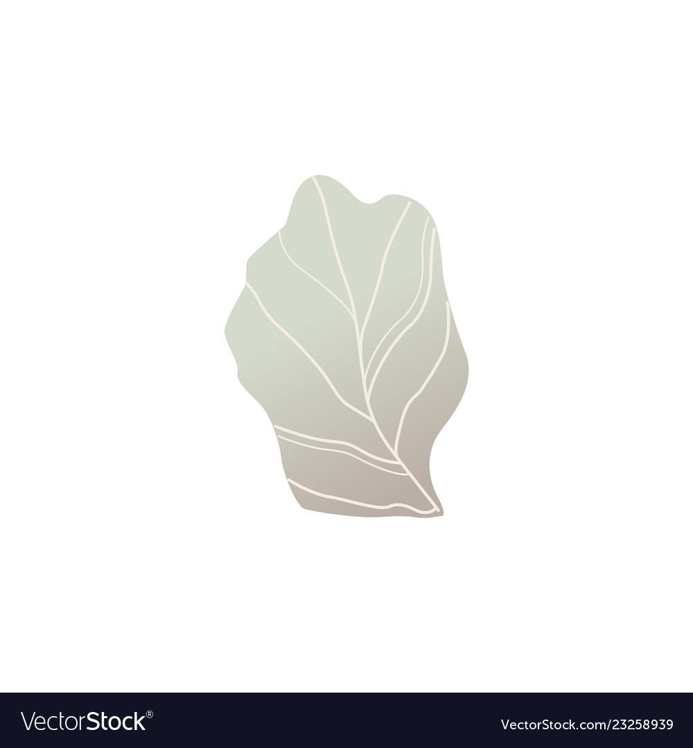 Fantasy shrub or plant leaf