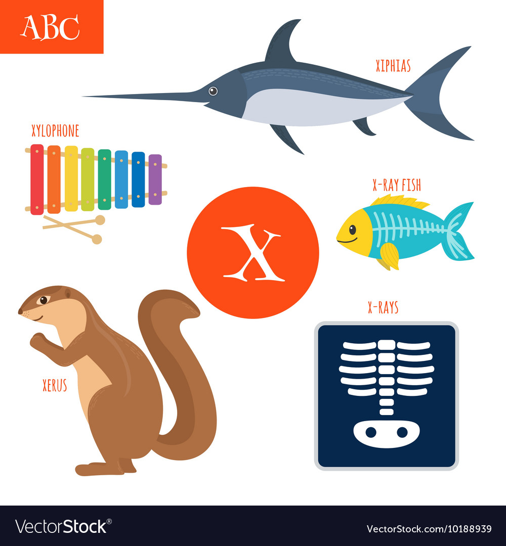 Letter X Cartoon alphabet for children Xylophone Vector Image