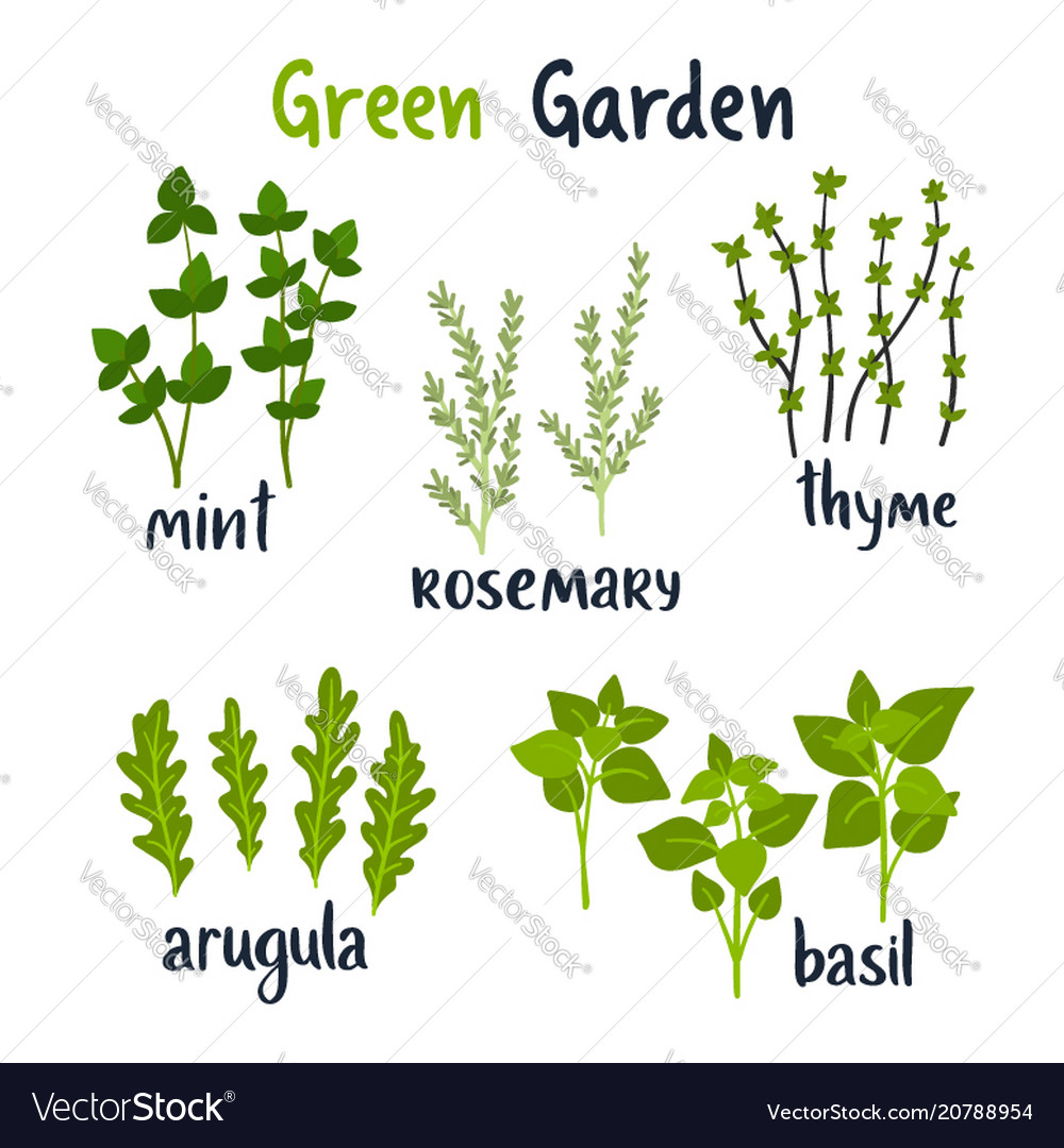 Set of herbs with lettering green