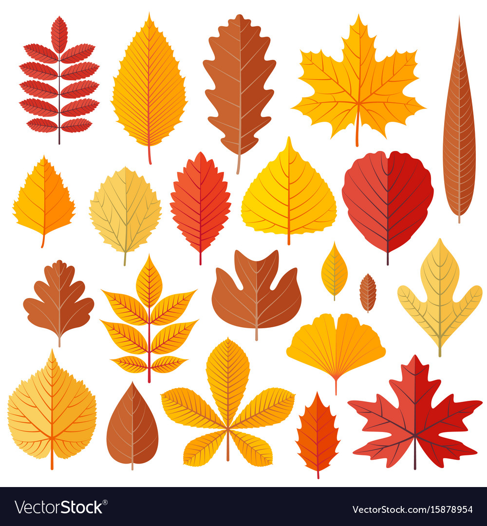 Set of tree autumn leaves isolated on the white