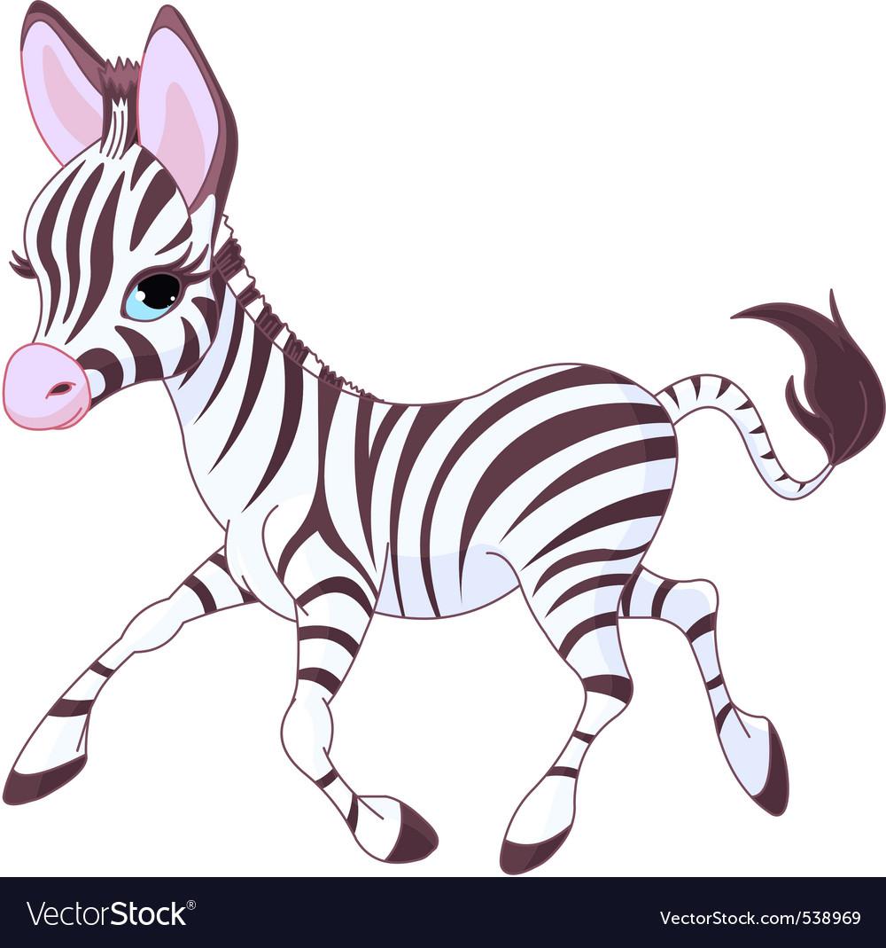 Baby zebra vector image