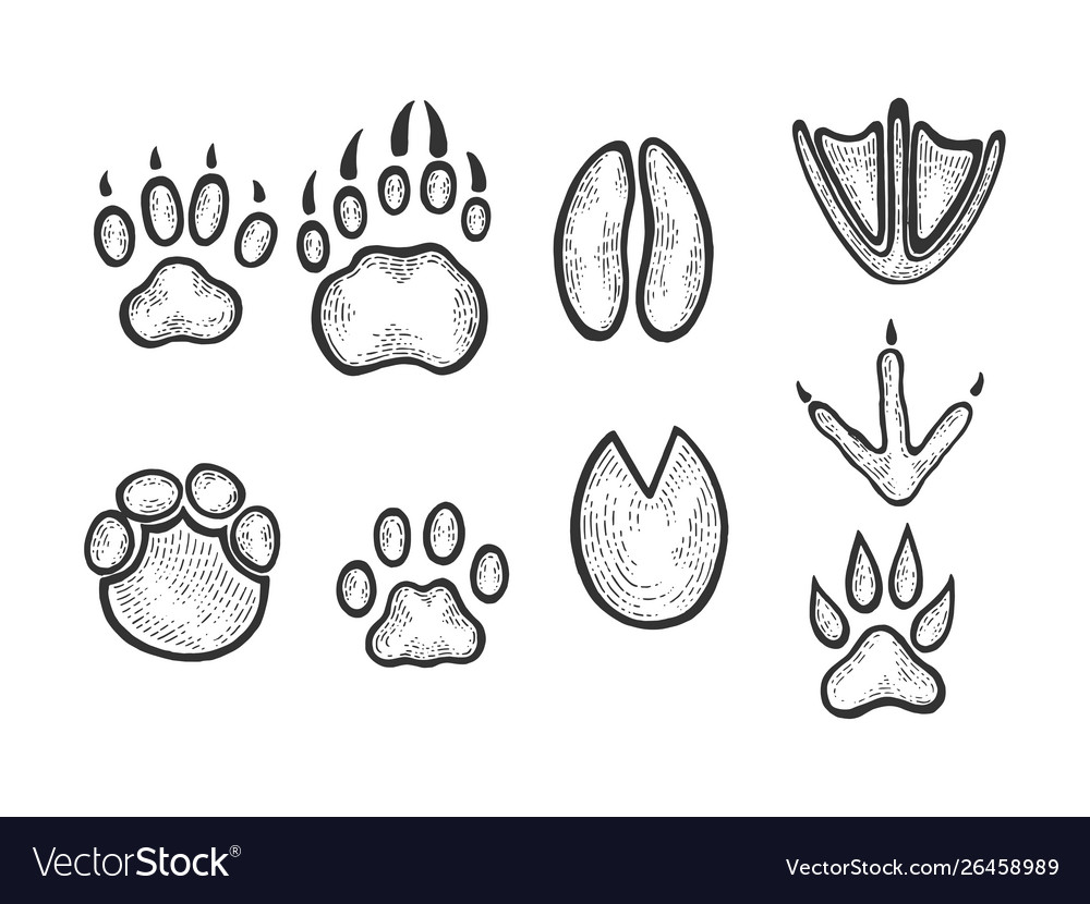 Animal tracks sketch engraving