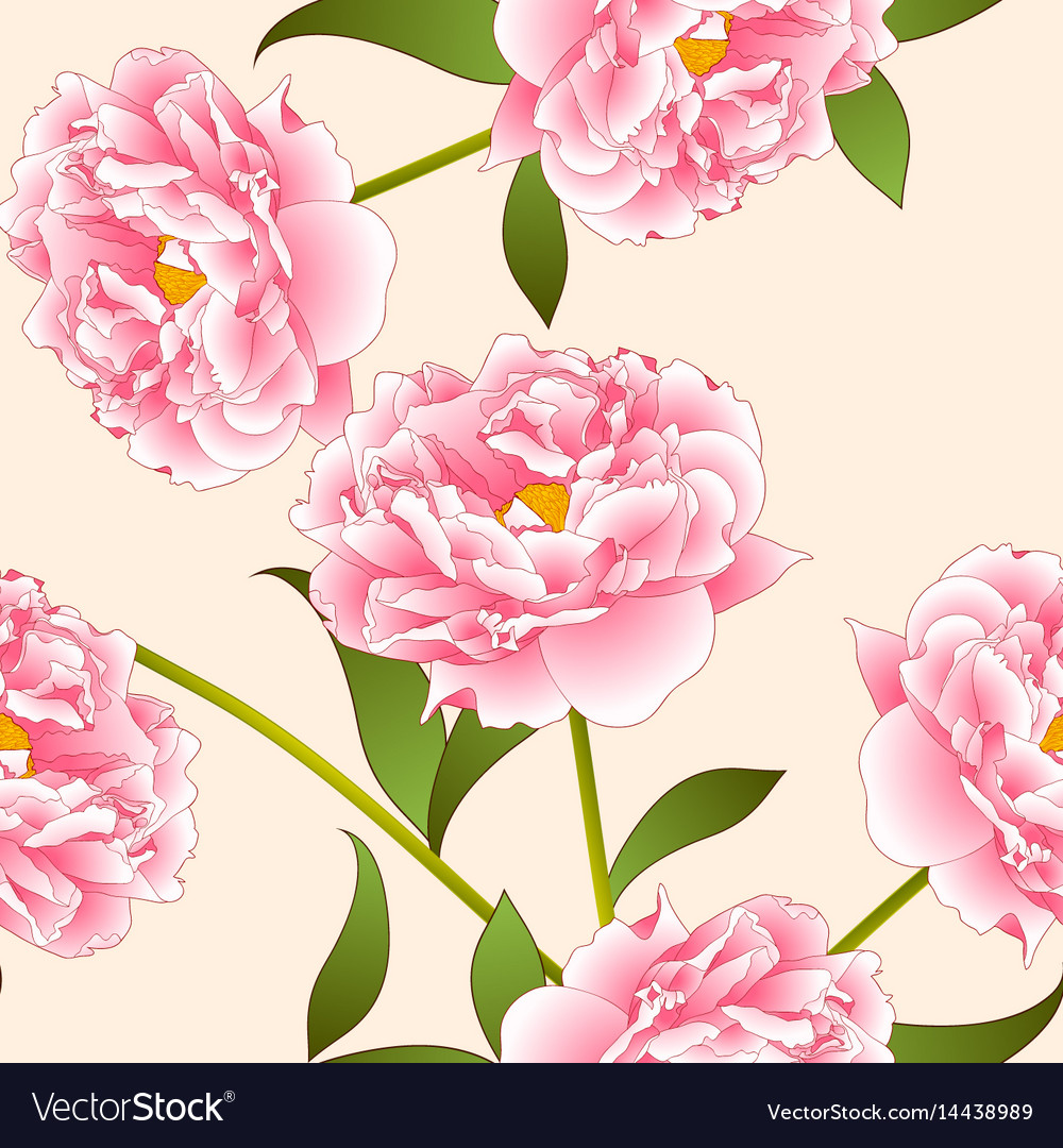Pink peony flower on beige ivory background