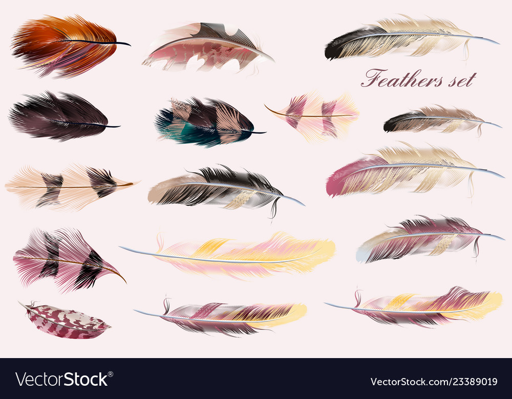 Collection of feathers in pink soft colors