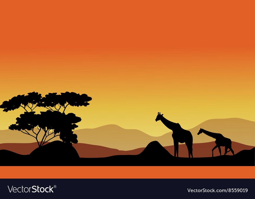 The giraffes on the hills