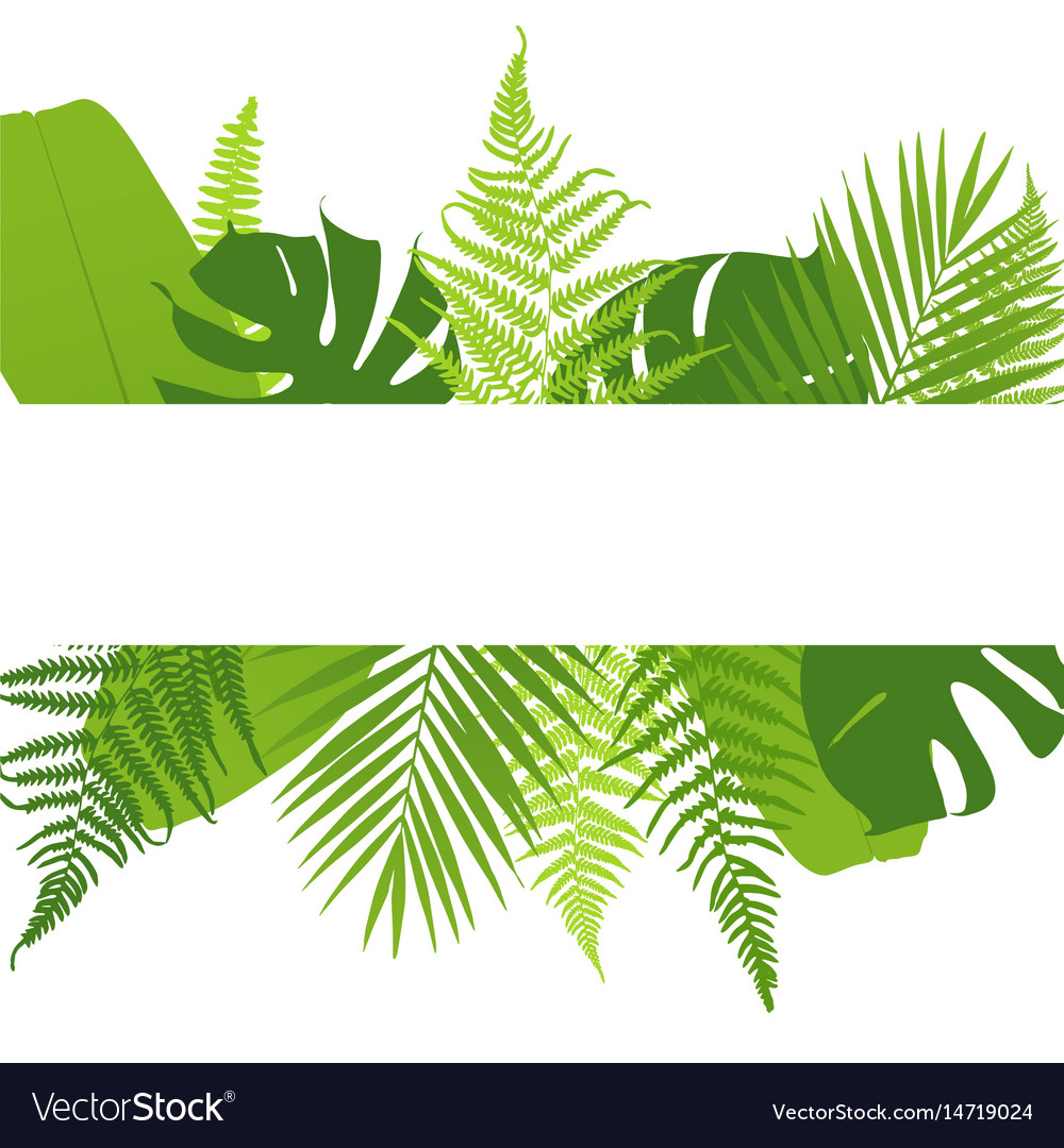Banner with ferns tropical leaves