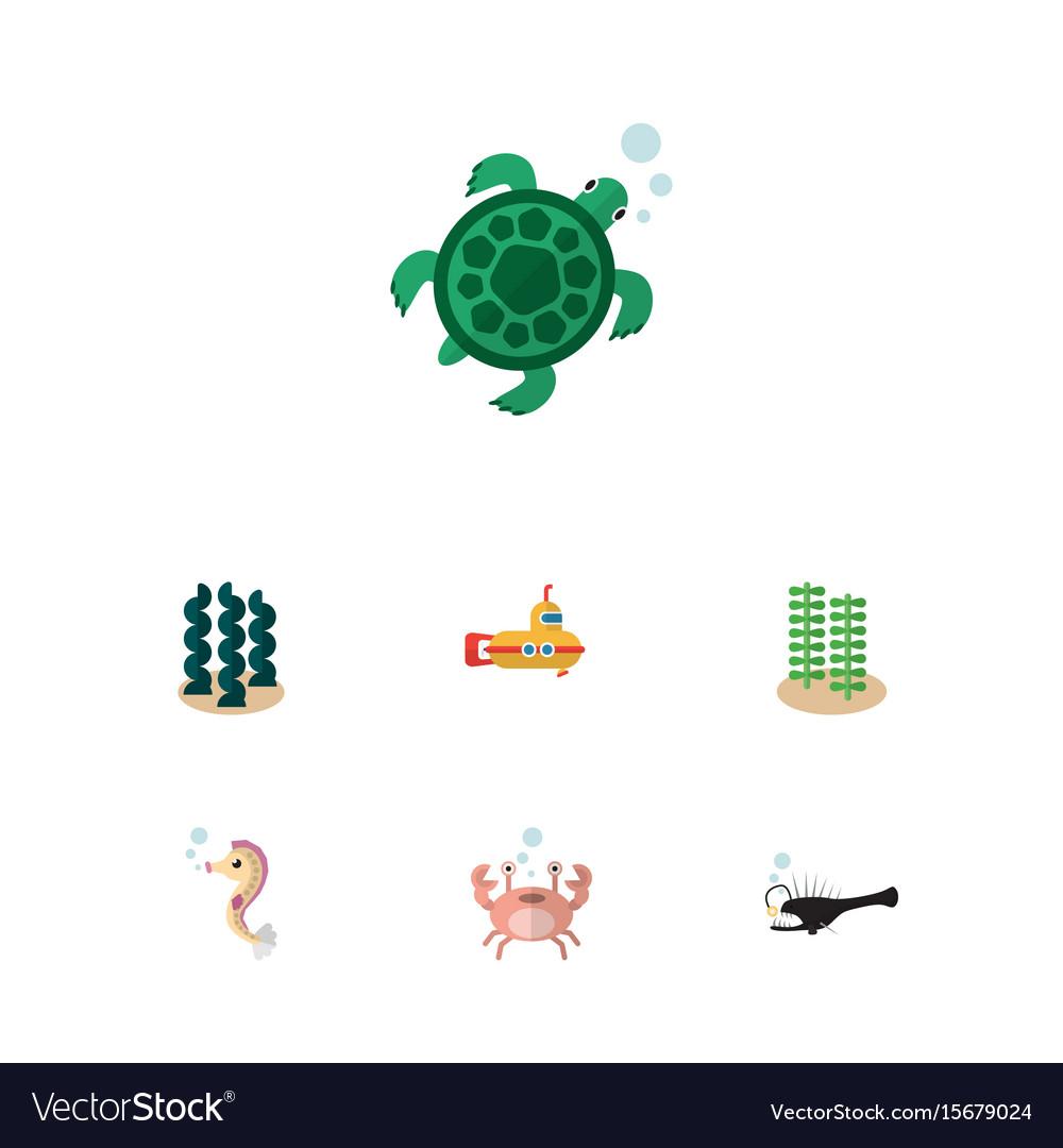 Flat icon nature set of alga periscope