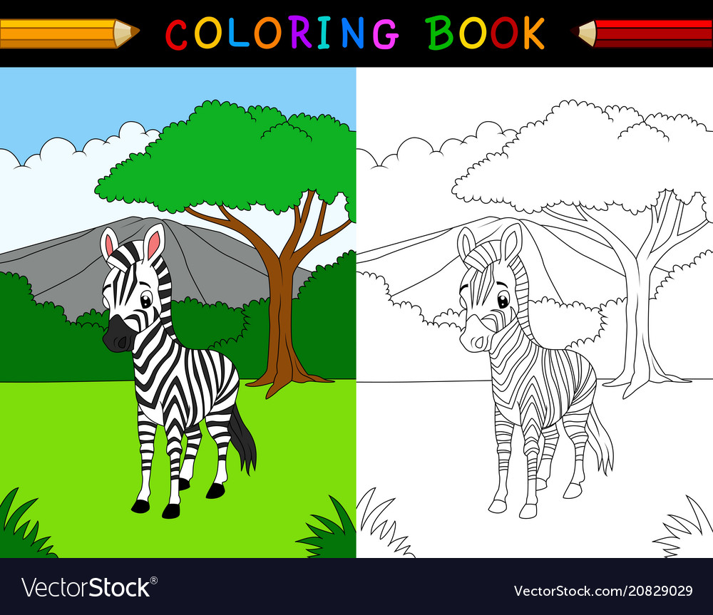 Cartoon zebra coloring book vector image