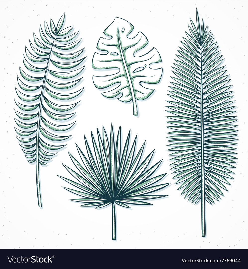 Isolated palm leaves handmade in sketch style