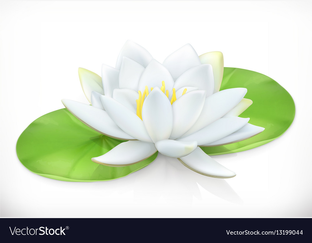 Water Lily Lotus Flower 3d Icon Royalty Free Vector Image