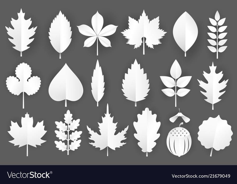 White paper cut autumn leaves set 3d fall